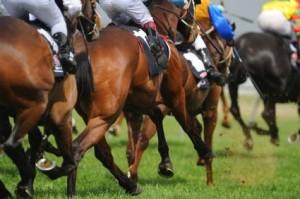MyBudget Gallop Ahead