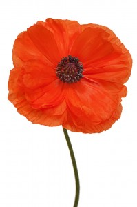 At the going down of the sun, we will remember them
